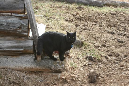 Boulder Hot Springs Inn and Spa : Jasper the Inn cat