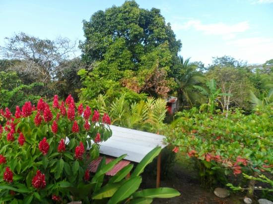 Cabins Heliconia