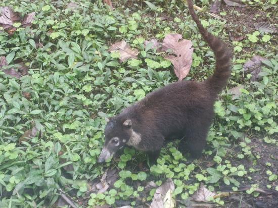 Trip Advisor Costa Rica Monkey Tours