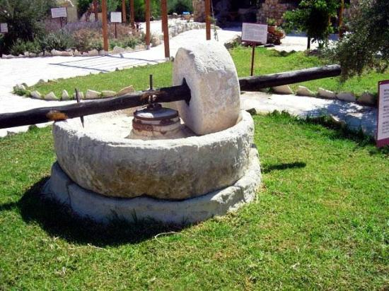 Oleastro Olive Park and Museum: Millstone