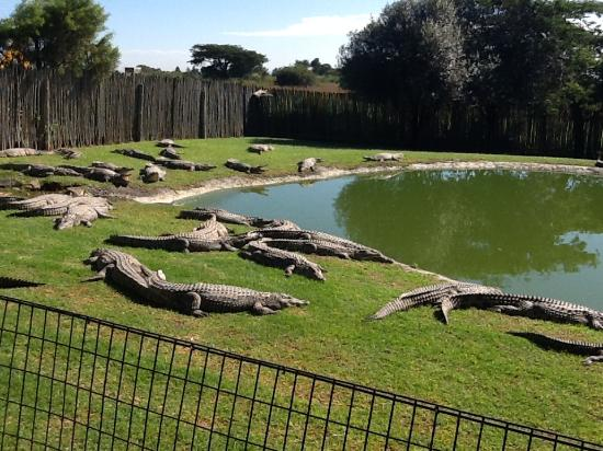 ‪Croc City Crocodile and Reptile Park‬