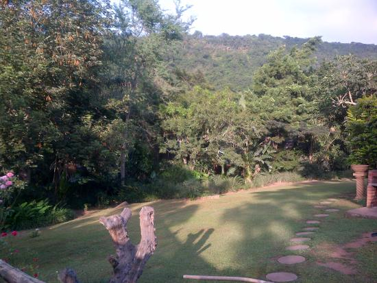 Tree House River Lodge: distant picture