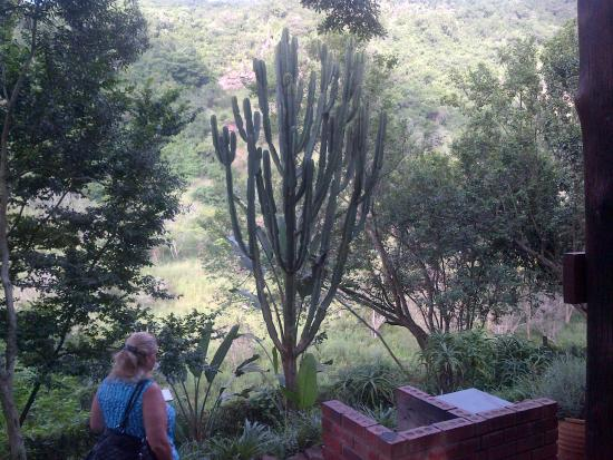 Tree House River Lodge: Don't play with this cactus