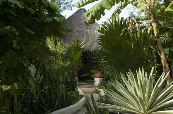 Amarte Hotel : secluded path to each villa (two hotel rooms with shared palapa).