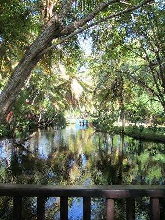 Nice pond with fish in the resort foto di grand paradise for Koi pond traduzione