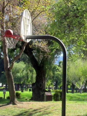 Rengstorff Park & Pool : Rengstoff Park & Pool, Mountain View, Ca