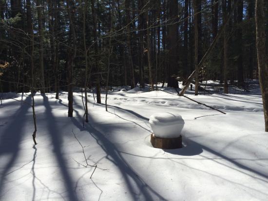 Williston, VT: Sun reflects off the snow in the woods