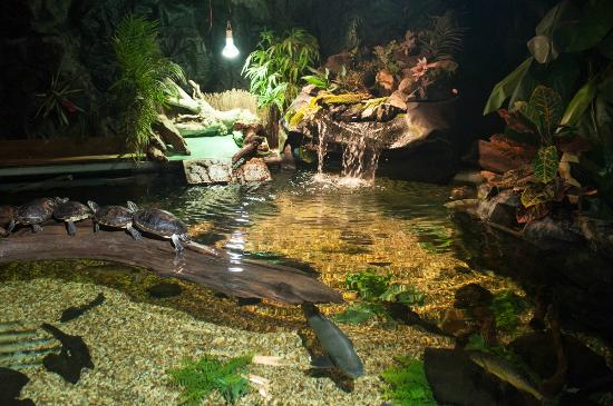 ... Crocodile- New for 2015 - Picture of St Andrews Aquarium, St Andrews