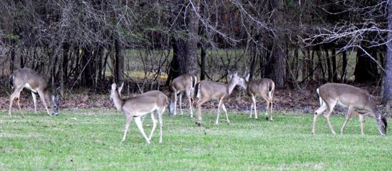 Uchee Creek Army Campground and Marina: Camnpsite Visitors.