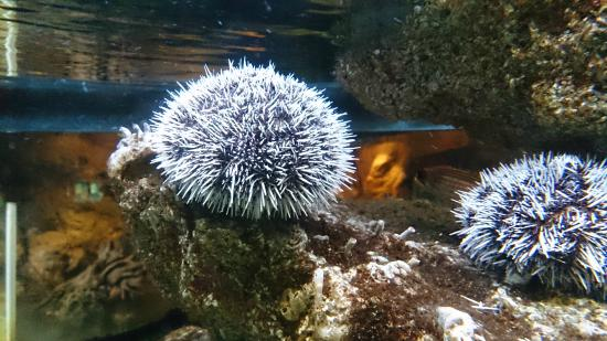 Aquarium de la Guadeloupe - Place Creole, La Marina, Le Gosier 97190