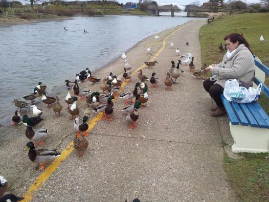 Chantry Villa - Skegness: Duck pond