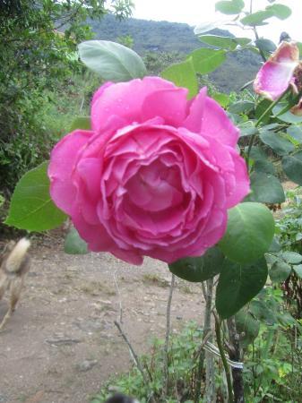Lumiar, RJ: No jardim com muitas flores diferentes