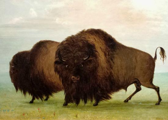 Gilcrease Museum: More Bison Pictures and Sculptures Than You Can Shake A Stick At