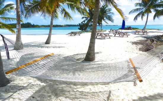 Bluff House Beach Resort & Marina: This hammock is waiting for YOU