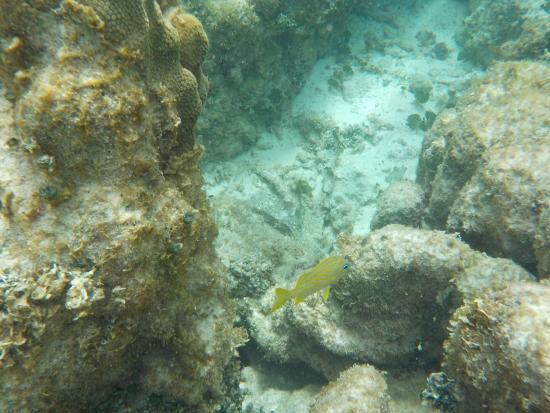 The Original Snorkeling Adventure: fish