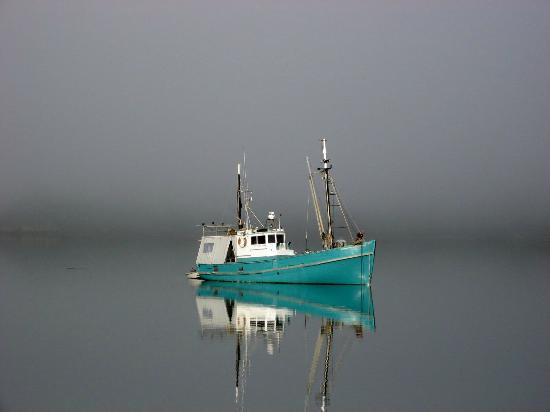 Furneaux Lodge : A foggy morning at Endeavour Inlet
