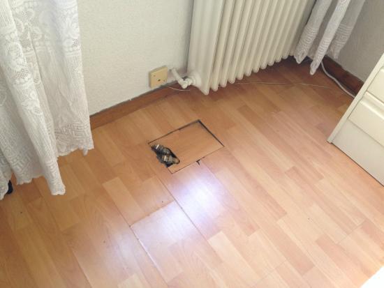 Apartamentos Goya 75: Floor