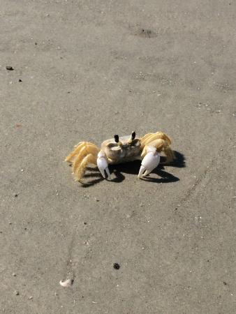 Χίλτον Χεντ, Νότια Καρολίνα: Mr. Crabs!!