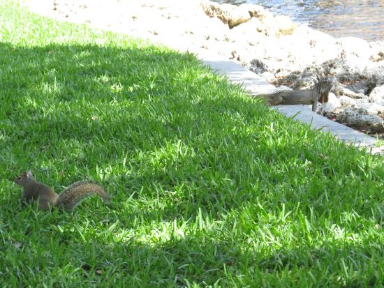 Sun Trolley: Iguana and squirrel on the Riverwalk.