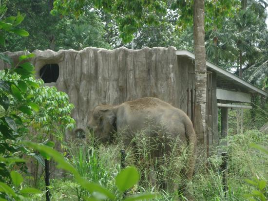 trip to the zoo negara Little tiger growing up pages home about us toy centered learning tot school shopping guide.