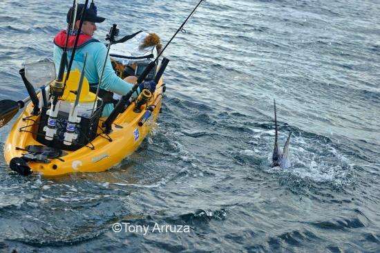 Monster amberjack picture of deep blue kayak fishing for Deep blue kayak fishing