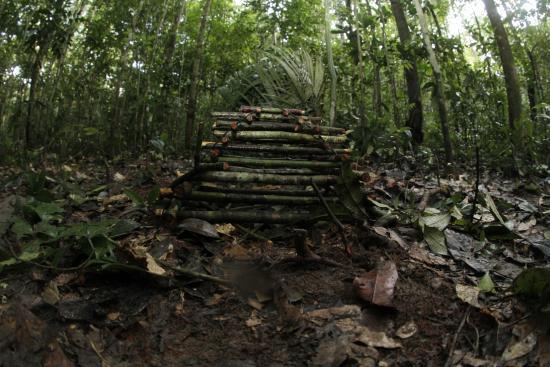 Amazon Jungle Palace: Passeio na floresta