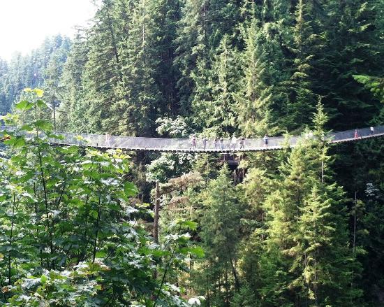 Capilano suspension bridge discount coupons