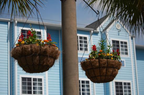 夏洛特港溫德姆米克羅套房飯店照片