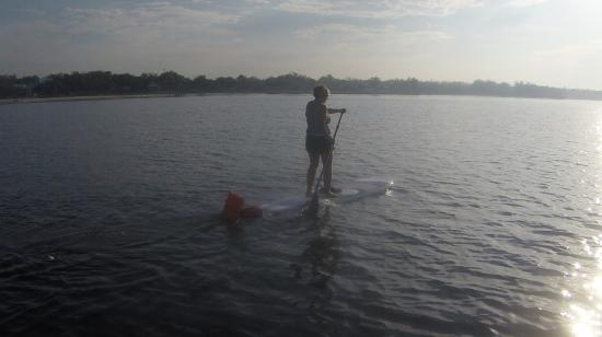 Paddles Up: paddleboarding on the bay