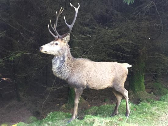 Bainloch Deer Park