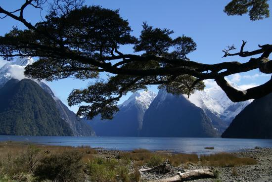Milford Sound Fly - Cruise - Fly : This is my Christmas card...