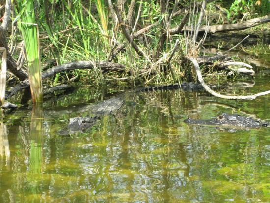 Everglades City, FL: more photos