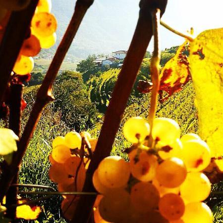 San Floriano del Collio, Italy: Cosy place!