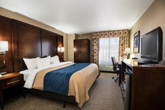 Comfort Inn & Suites: Single King Standard