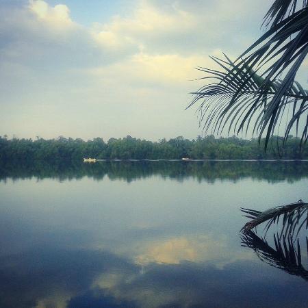 Mangrove Villa: Beautiful morning river