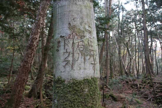 Aokigahara Metsä