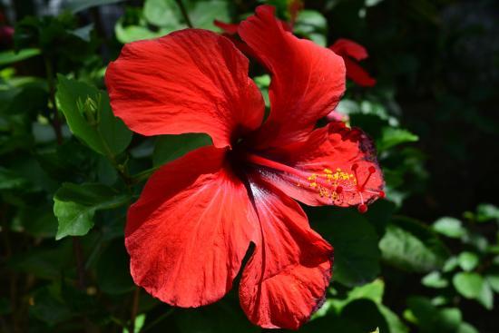 Le jardin picture of au jardin des colibris deshaies for Au jardin des colibris deshaies guadeloupe