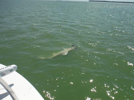Picture of florida keys flats fishing for Florida keys fishing