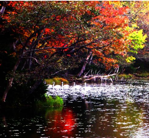 Shari-cho, ญี่ปุ่น: Shiretoko-Goko in autumn