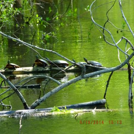 Baltimore Woods Nature Center Trails: frog (and turtle) pond