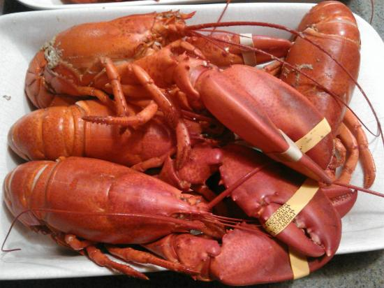 Silverton Sporting Ranch: Nothing like Maine Lobster