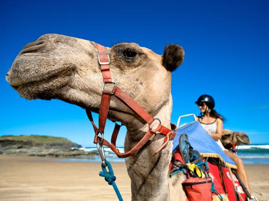 Coffs Harbour, Australien: Coffs Coast Camels