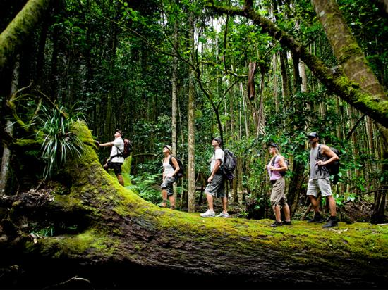 Coffs Harbour, Australien: Coffs Coast Rainforests
