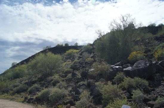 Deer Valley Petroglyph Preserve : A view of the area - showing all the boulders