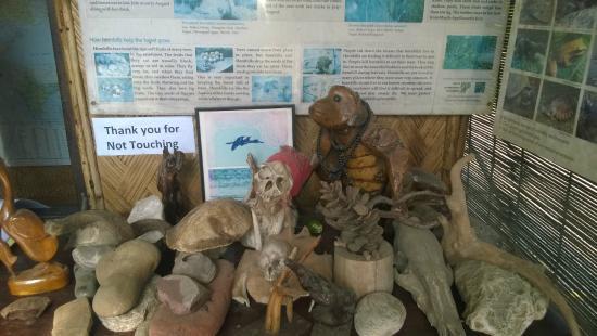 Nameri Eco Camp : office display
