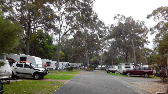 Lane Cove River Tourist Park : Powered Caravan Sites
