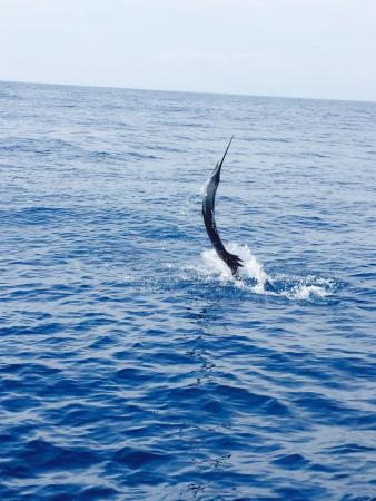 Alajuela, Costa Rica: An excellent day of fishing with Easy Transfer Costa Rica