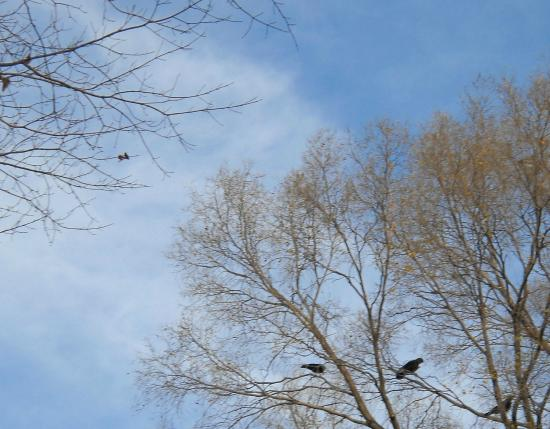 Vilas Park: Trees branching and crows lingering encourage and inspire during a stroll!