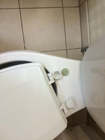 Hilton Garden Inn Tampa Northwest / Oldsmar: Broken toilet seat