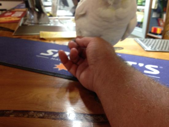 Mangonui Hotel: Barney shaking hands  (claw/finger)